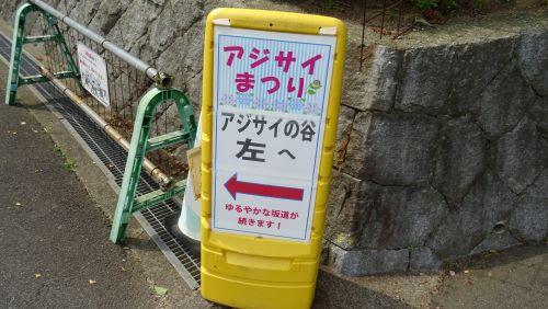 あじさいの谷4.JPG