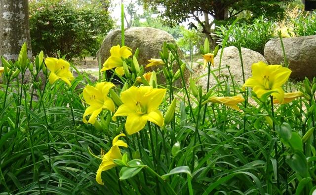 国営明石海峡公園14.JPG