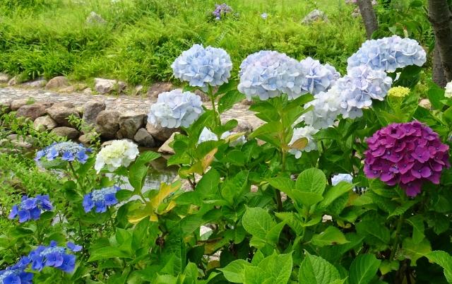 国営明石海峡公園36.JPG