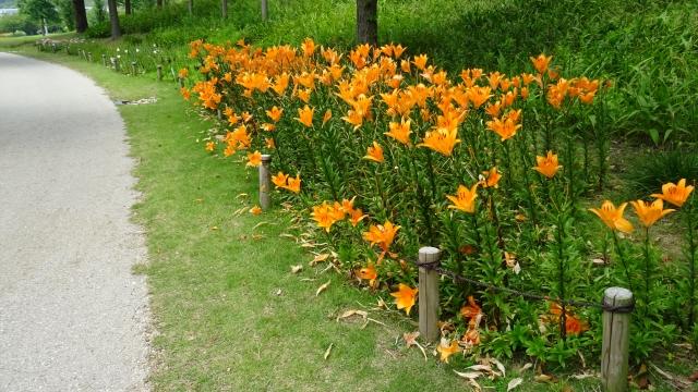 国営明石海峡公園39.JPG