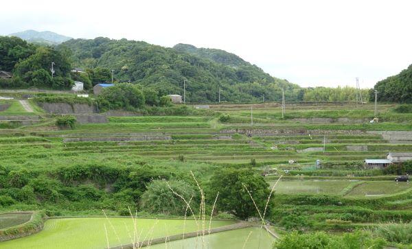 石田の棚田8.JPG