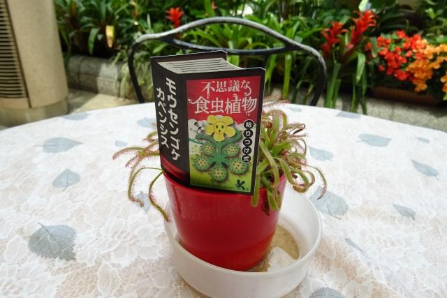 食虫植物1.JPG
