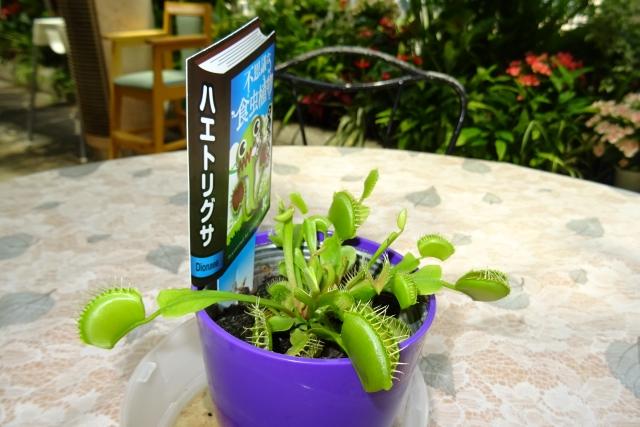 食虫植物4.JPG
